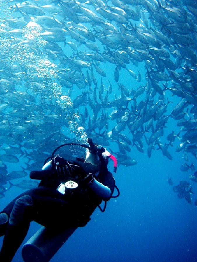 Philippine fun divers divers alona beach panglao bohol 12 768x1024