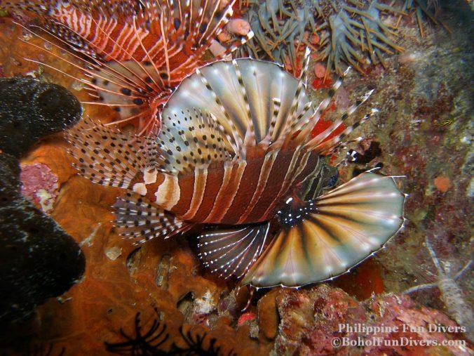 Philippine fun divers sea creatures 156
